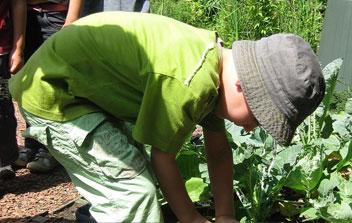 Little Garden Gurus